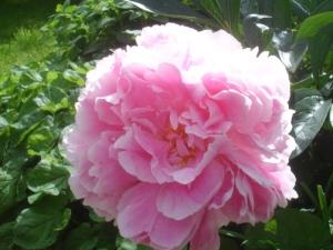 Pink flower large